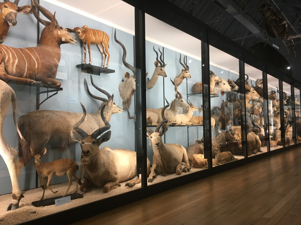 Natural History museum Tring Engeland